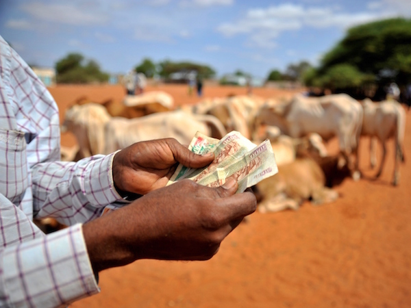 People buying cattle in the livestock market in Wajir
